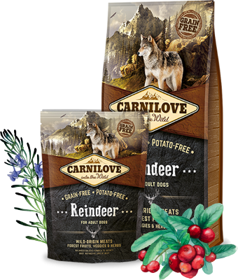 Reindeer for adult dogs